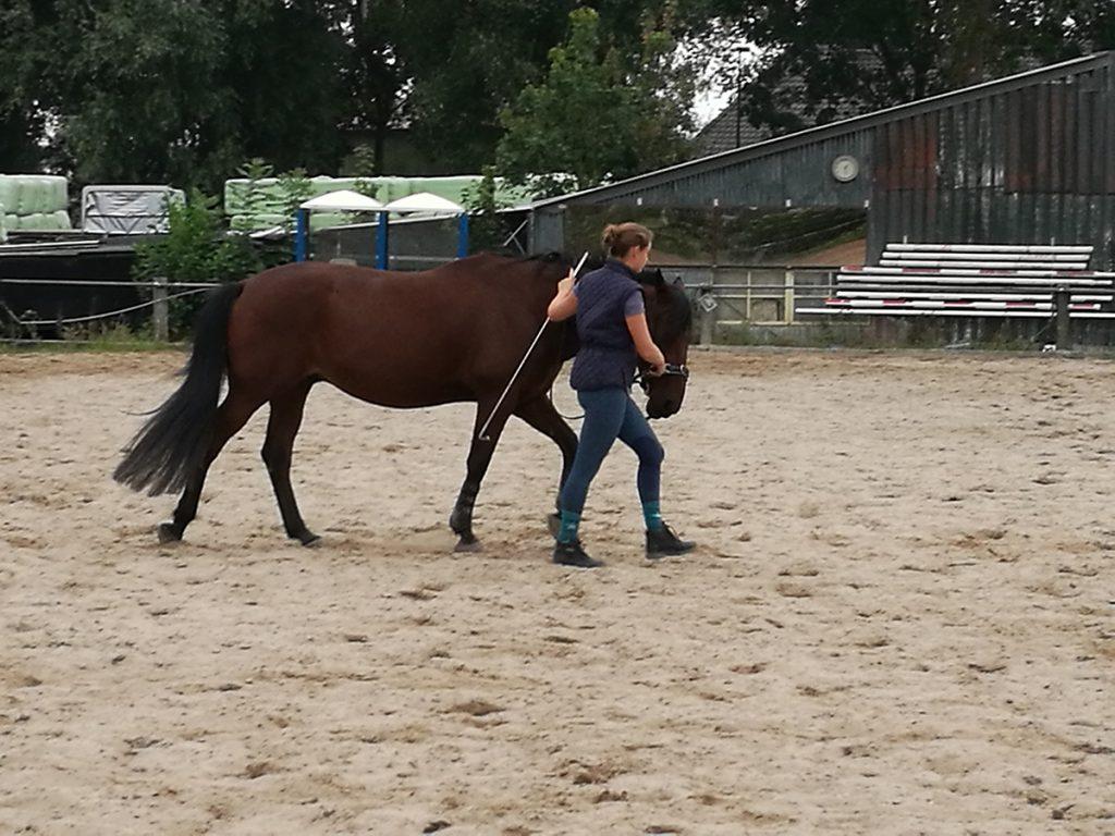 endurancepaard-trainen-cassandra