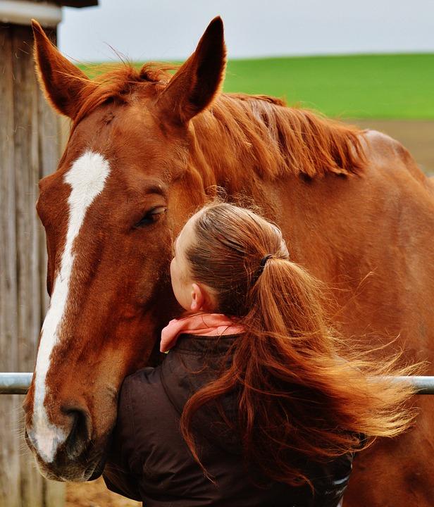 paard-dazenspray-litovet